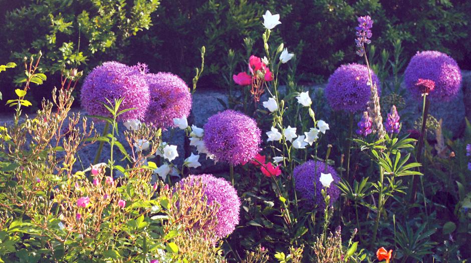 blumengärten, Gartenarbeit ideen